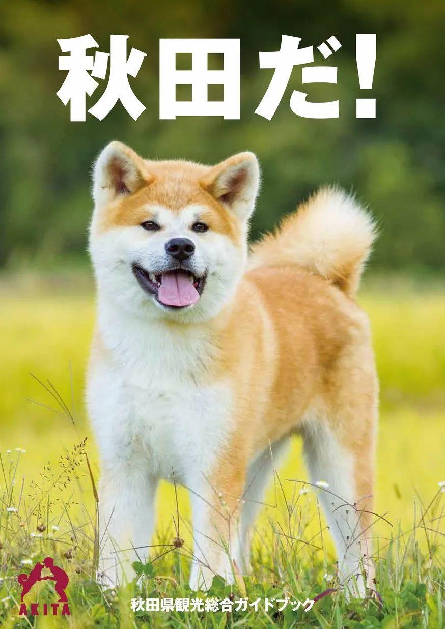 """"""" 忠犬八公"""" 的故乡秋田,除了汪星人还有什么可玩的?"""
