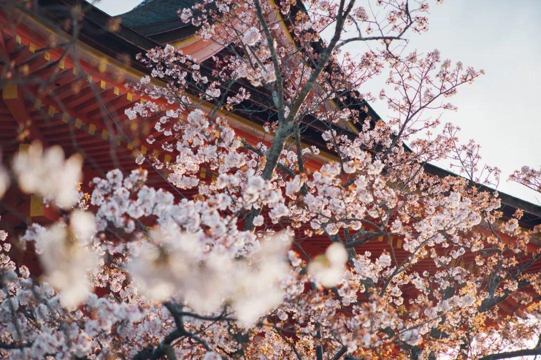 去日本参观寺庙和神社,有什么需要注意的?